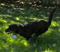 Ebony - Straw for Dogs Success Story