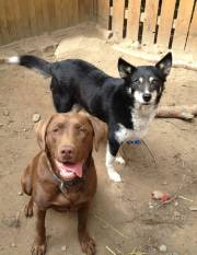 Kit and Cora - Straw for Dogs Success Story