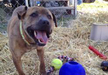 Dozer - A Straw for Dogs Success Story