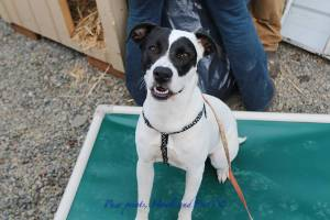 Niho - A Straw for Dogs Success Story